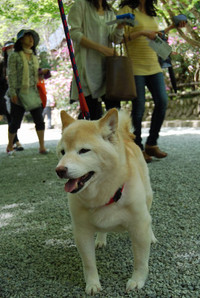Murouji_044
