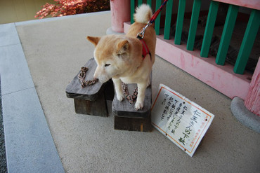 Tsubosakadera_06