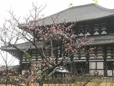 Toudaiji_05